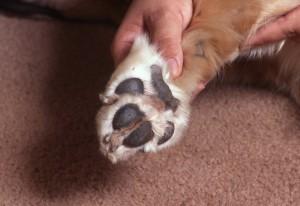 Pfoten- und Ballenpflege im Hundesalon Dog's Beauty in München