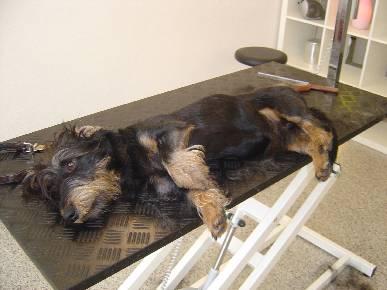 Fellpflege im Hundesalon Dog's Beauty in München