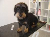 Fellpflege im Hundesalon Dog's Beaut in München